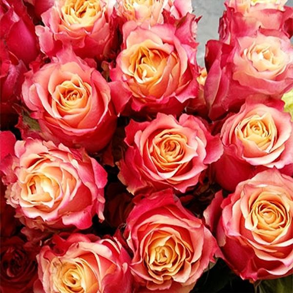Роза Чайно-Гибридная 3Д