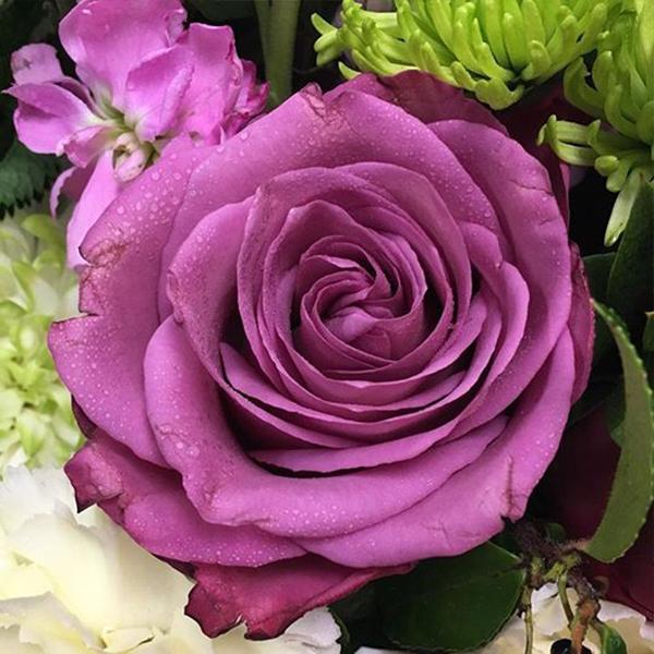 Роза Чайно-Гибридная Блуберри